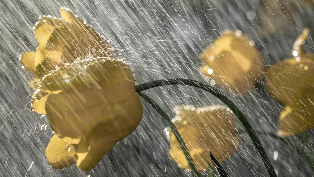 Toute la pluie tombe sur moi
