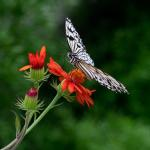 Papillonner au printemps