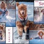L hiver selon Sophie