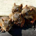 Les intrus - Animalier - Daniel - Desmarais